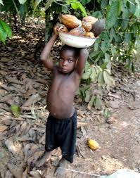 cocoa slavery